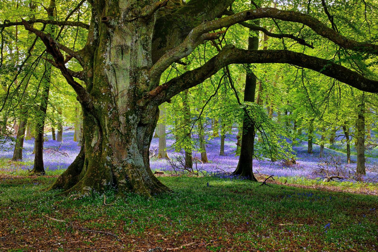 The tree lined countryside around Marlow in Buckinghamshire is the ideal place to escape the world, relax and take part in a guided forest bathing walk. It promotes good mental health and wellbeing and helps you to recharge the batteries.
